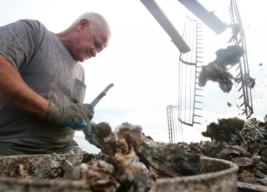 Steven Richardson culls oysters in West Bay just north of Panama City Beach, Florida. (Panama City Photographer Andrew Wardlow)